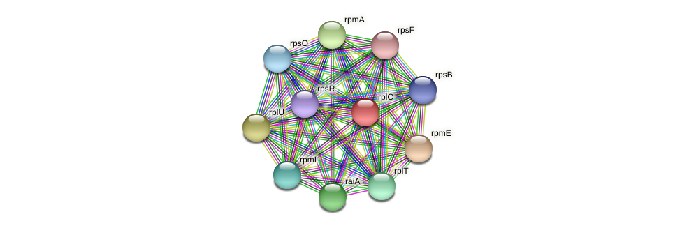 rplC protein (Dialister invisus) - STRING interaction network