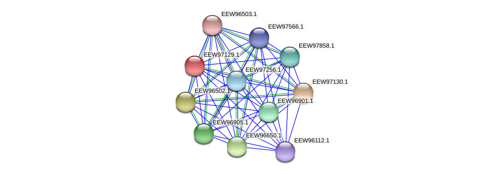 GCWU000321_01116 protein (Dialister invisus) - STRING interaction network