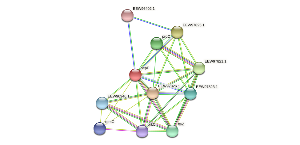 sepF protein (Dialister invisus) - STRING interaction network