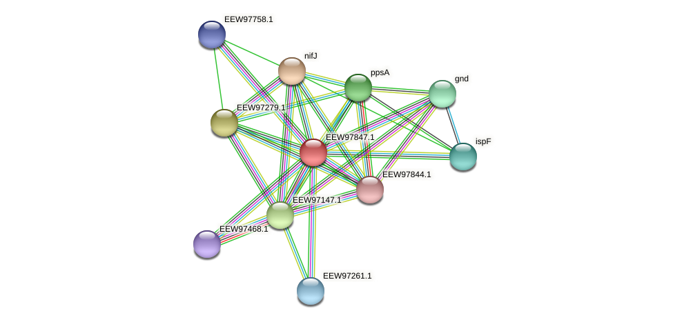 GCWU000321_01843 protein (Dialister invisus) - STRING interaction network