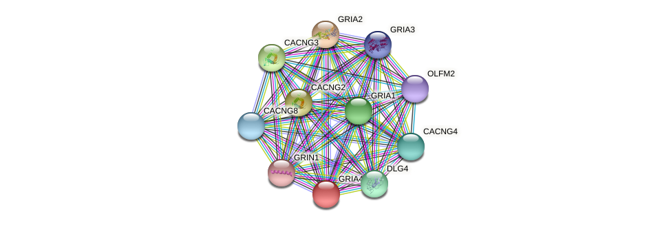 GRIA4 protein (Nomascus leucogenys) - STRING interaction network