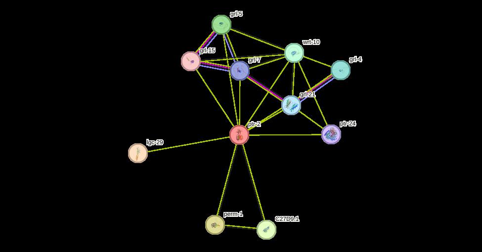 ptr-2 protein (Caenorhabditis elegans) - STRING interaction network