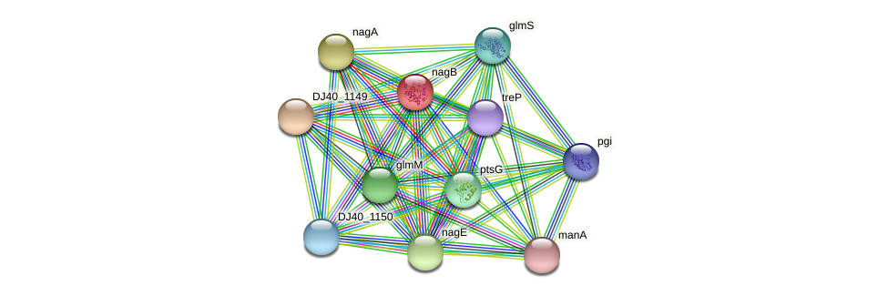 nagB protein (Yersinia pseudotuberculosis) - STRING interaction network
