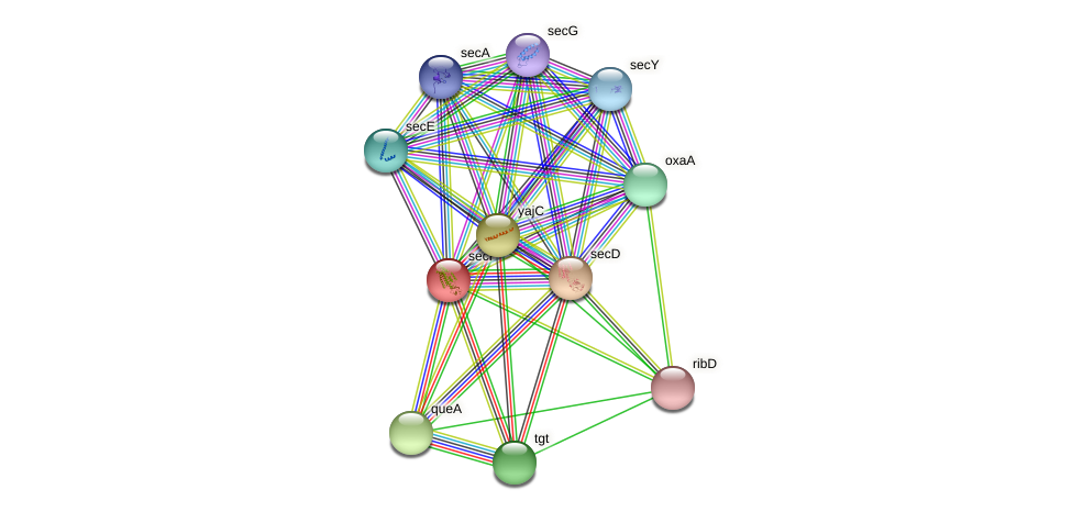 secF protein (Yersinia pseudotuberculosis) - STRING interaction network