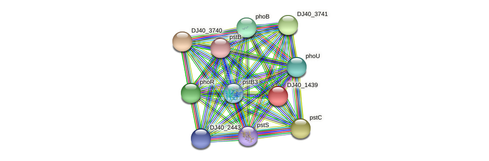 sphX protein (Yersinia pseudotuberculosis) - STRING interaction network