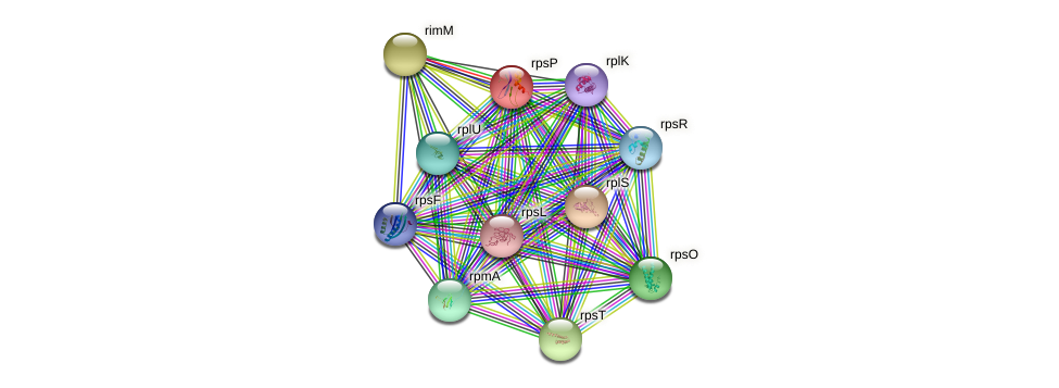 rpsP protein (Yersinia pseudotuberculosis) - STRING interaction network