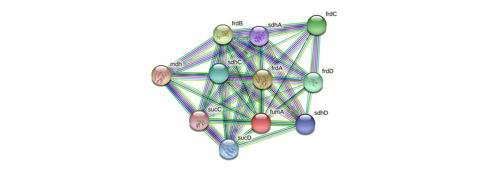 fumA protein (Yersinia pseudotuberculosis) - STRING interaction network