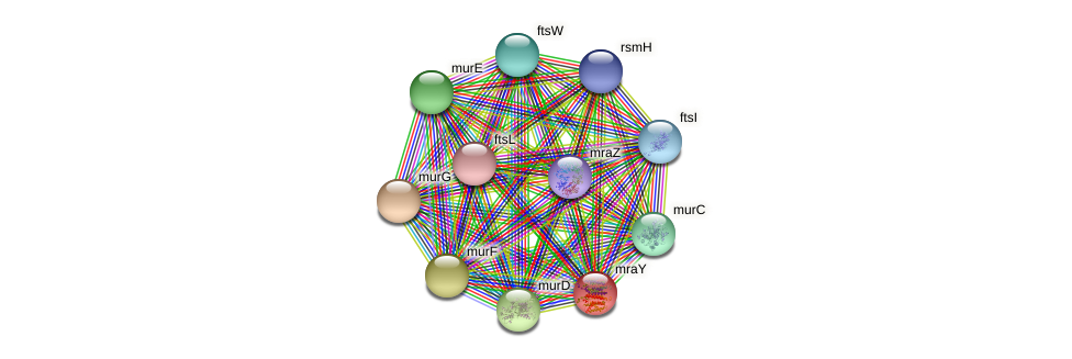 mraY protein (Yersinia pseudotuberculosis) - STRING interaction network