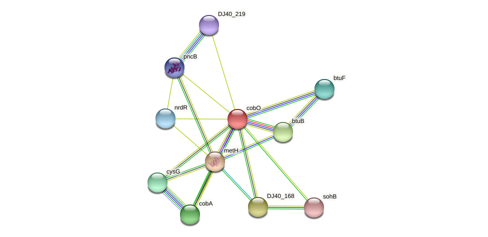 cobO protein (Yersinia pseudotuberculosis) - STRING interaction network