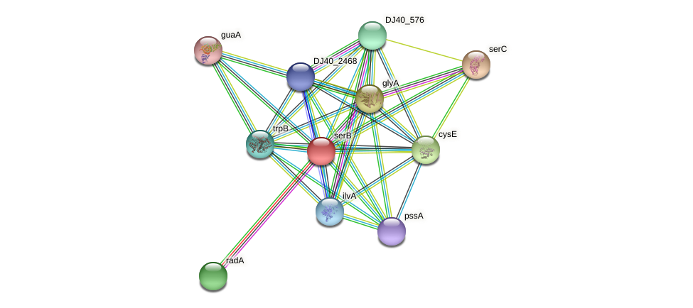 serB protein (Yersinia pseudotuberculosis) - STRING interaction network