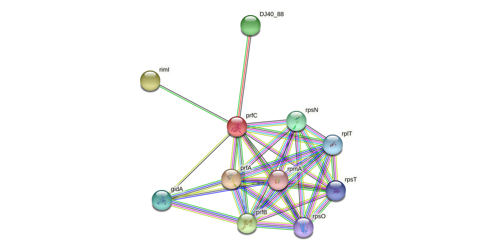prfC protein (Yersinia pseudotuberculosis) - STRING interaction network