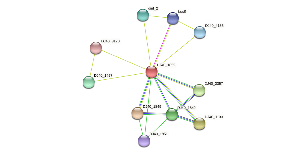 intB protein (Yersinia pseudotuberculosis) - STRING interaction network