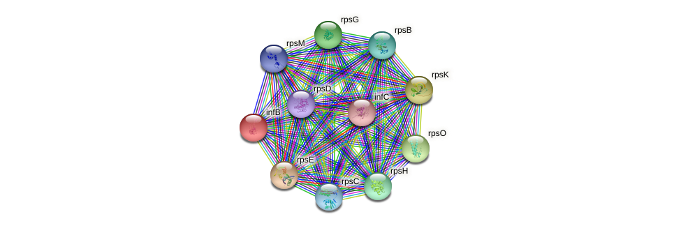 infB protein (Yersinia pseudotuberculosis) - STRING interaction network