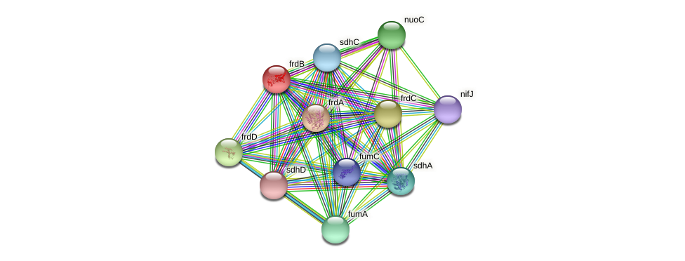 frdB protein (Yersinia pseudotuberculosis) - STRING interaction network
