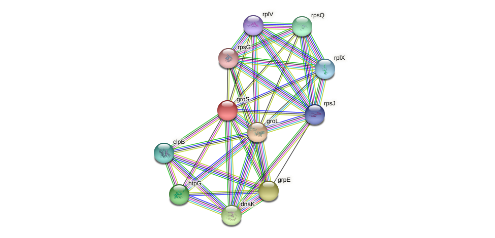 groS protein (Yersinia pseudotuberculosis) - STRING interaction network