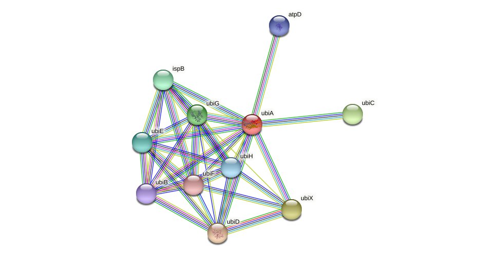 ubiA protein (Yersinia pseudotuberculosis) - STRING interaction network