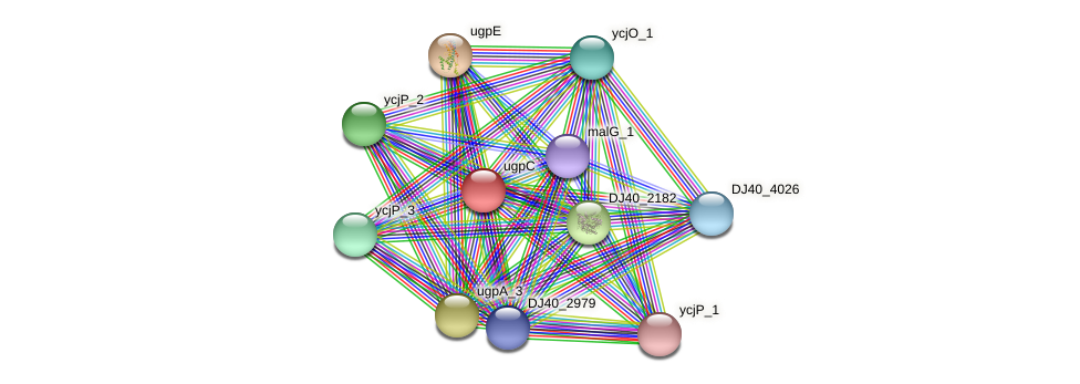 ugpC_2 protein (Yersinia pseudotuberculosis) - STRING interaction network