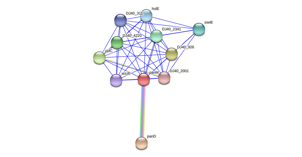 panZ protein (Yersinia pseudotuberculosis) - STRING interaction network