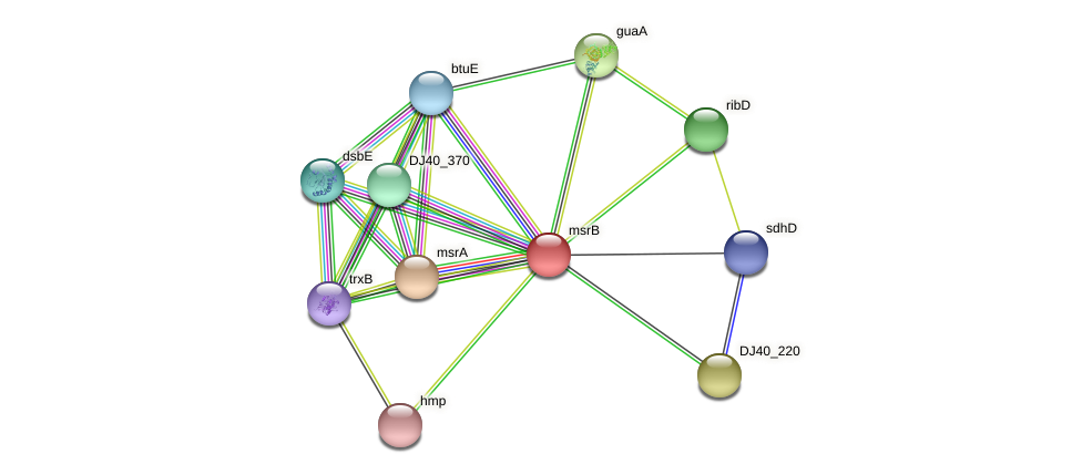 msrB protein (Yersinia pseudotuberculosis) - STRING interaction network