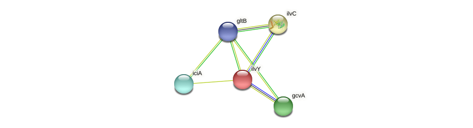 cynR_1 protein (Yersinia pseudotuberculosis) - STRING interaction network