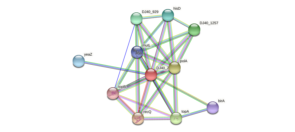 dinG_2 protein (Yersinia pseudotuberculosis) - STRING interaction network