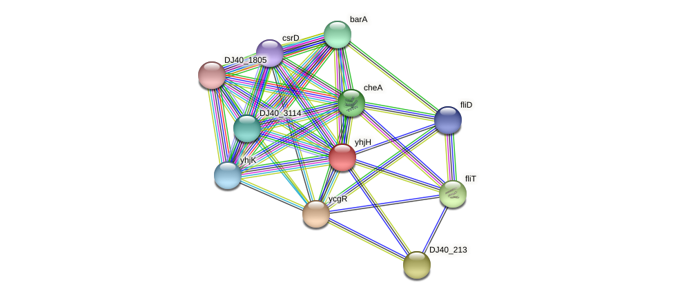 yhjH protein (Yersinia pseudotuberculosis) - STRING interaction network