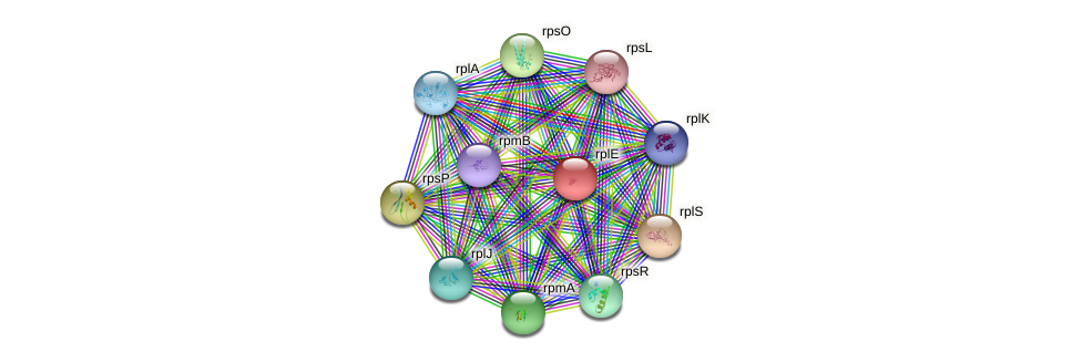 rplE protein (Yersinia pseudotuberculosis) - STRING interaction network