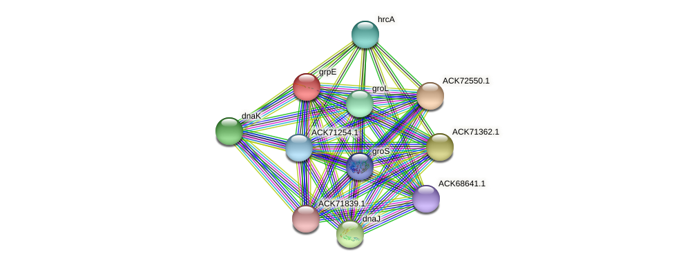 grpE protein (Cyanothece sp. PCC7424) - STRING interaction network