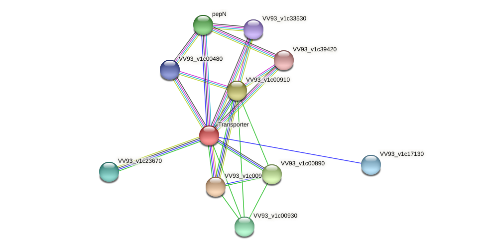 VV0102 protein (Vibrio vulnificus) - STRING interaction network