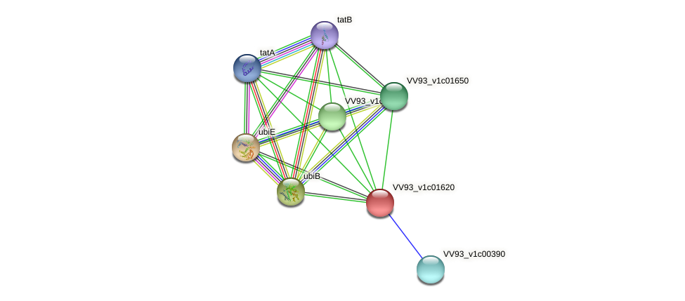 VV0175 protein (Vibrio vulnificus) - STRING interaction network