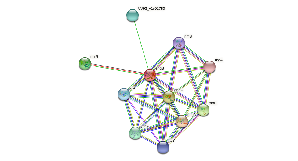 engB protein (Vibrio vulnificus) - STRING interaction network