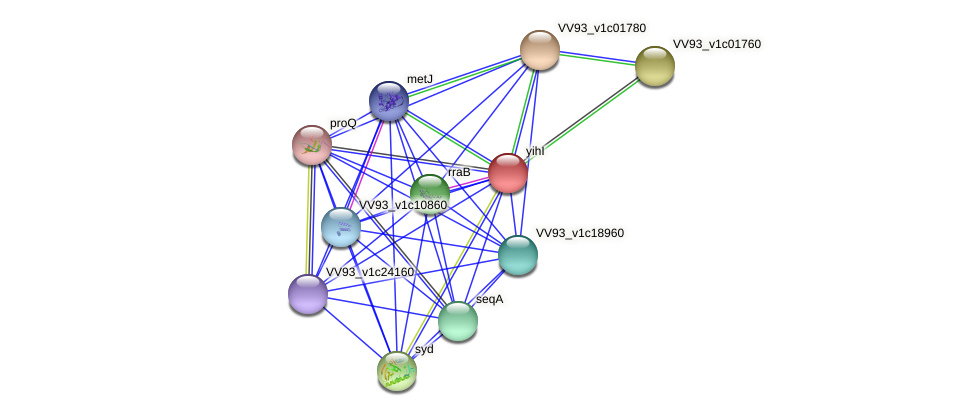 yihI protein (Vibrio vulnificus) - STRING interaction network