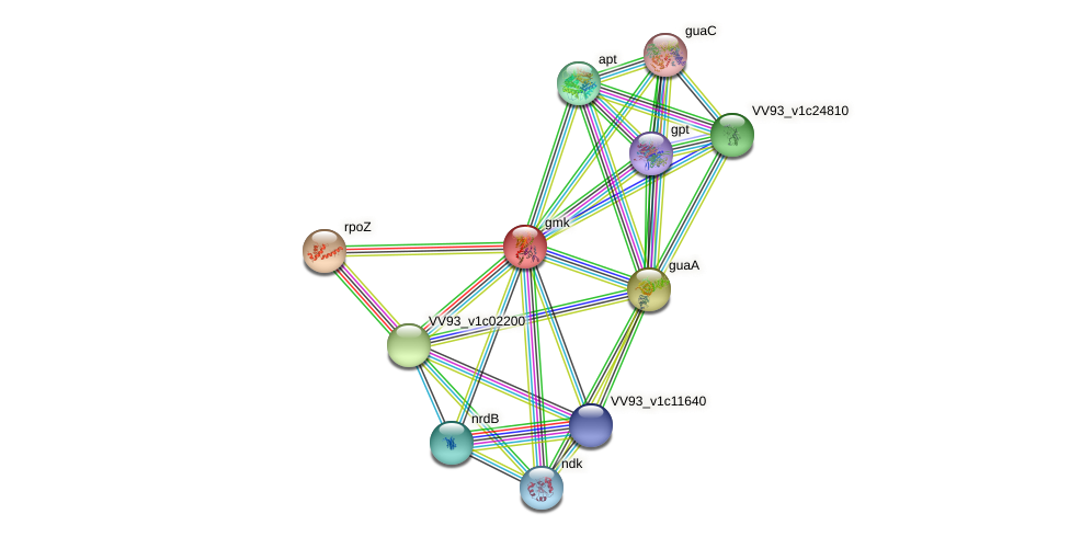 gmk protein (Vibrio vulnificus) - STRING interaction network