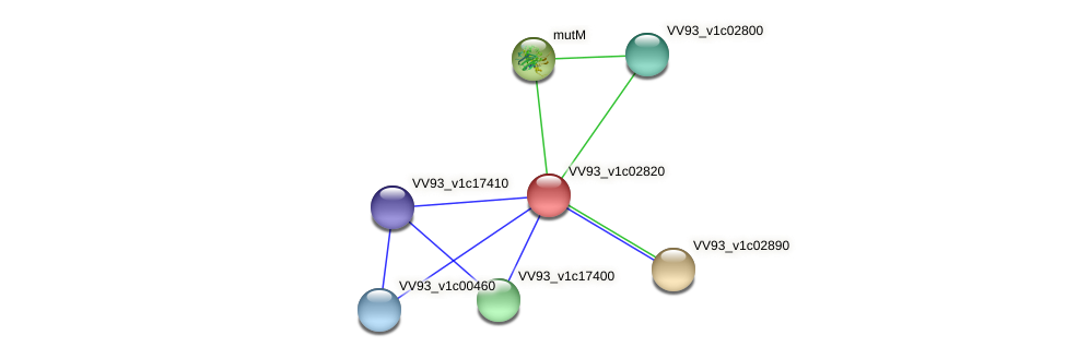 VV0291 protein (Vibrio vulnificus) - STRING interaction network