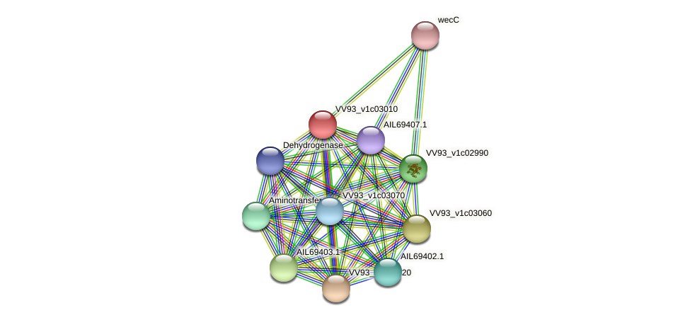 VV0311 protein (Vibrio vulnificus) - STRING interaction network