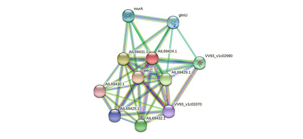 AIL69424.1 protein (Vibrio vulnificus) - STRING interaction network