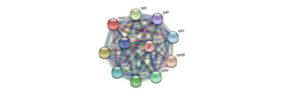 rpsS protein (Vibrio vulnificus) - STRING interaction network