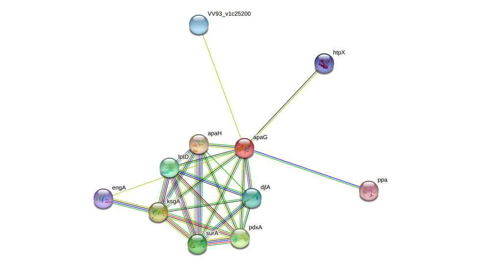 apaG protein (Vibrio vulnificus) - STRING interaction network