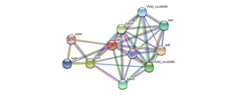 lptD protein (Vibrio vulnificus) - STRING interaction network