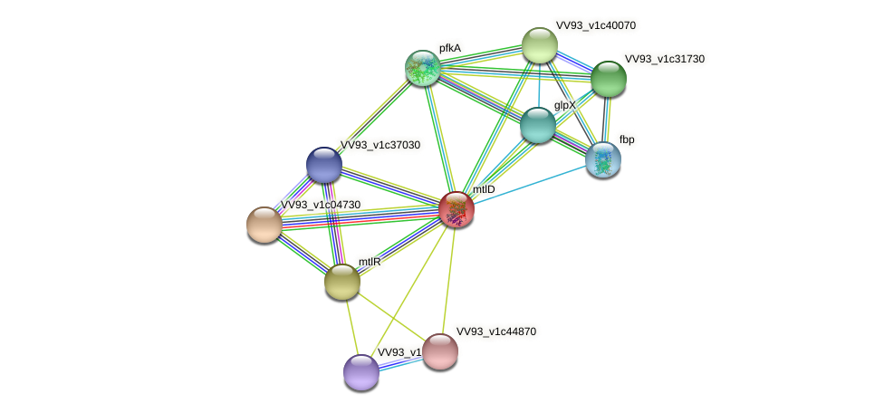 mtlD protein (Vibrio vulnificus) - STRING interaction network