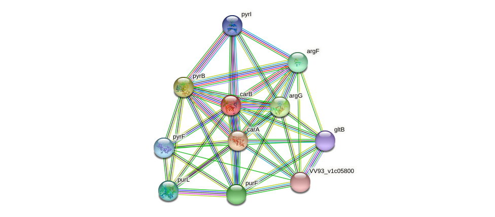 carB protein (Vibrio vulnificus) - STRING interaction network