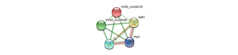 VV0677 protein (Vibrio vulnificus) - STRING interaction network