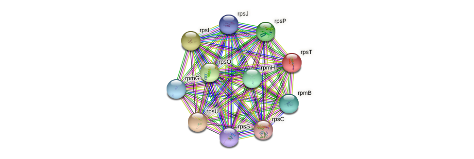 rpsT protein (Vibrio vulnificus) - STRING interaction network