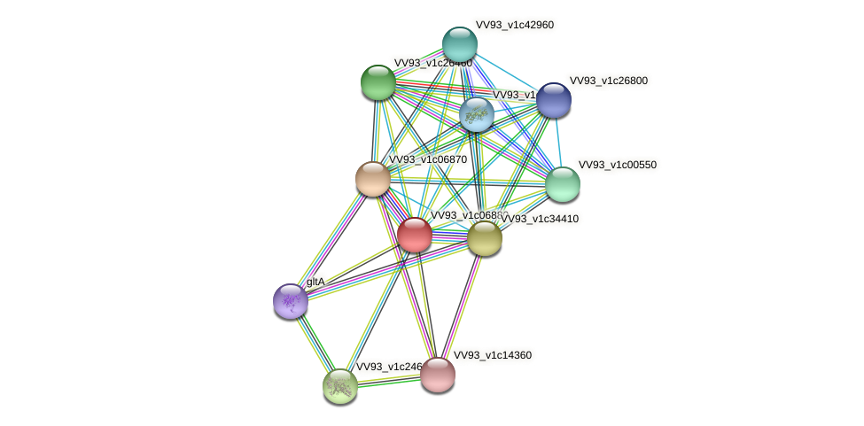 VV0742 protein (Vibrio vulnificus) - STRING interaction network