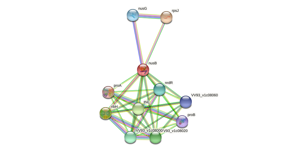 nusB protein (Vibrio vulnificus) - STRING interaction network