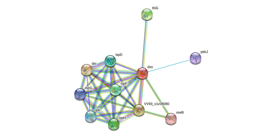 dxs protein (Vibrio vulnificus) - STRING interaction network