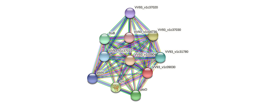 VV0977 protein (Vibrio vulnificus) - STRING interaction network