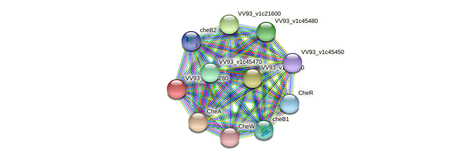 VV1004 protein (Vibrio vulnificus) - STRING interaction network