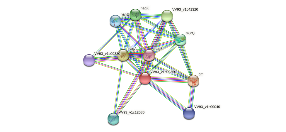 VV1012 protein (Vibrio vulnificus) - STRING interaction network
