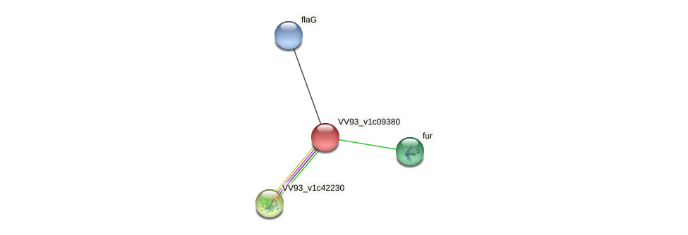 VV1015 protein (Vibrio vulnificus) - STRING interaction network